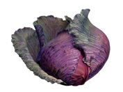 pic2_red-cabbage177x132